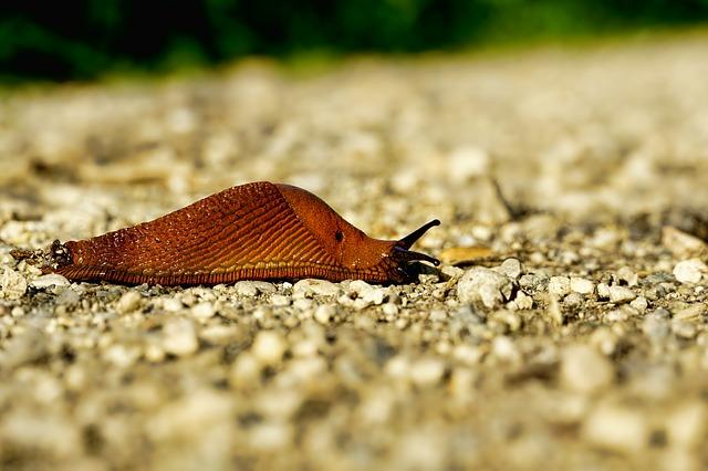 allevamento di limacce