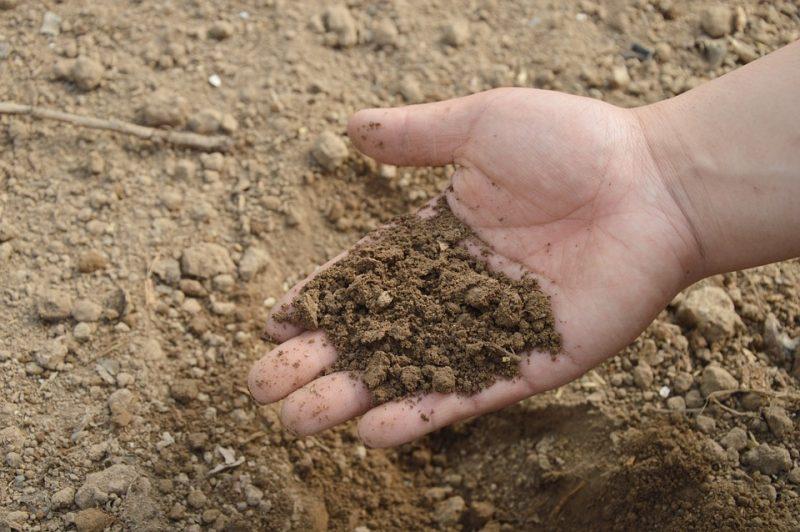 salinità suolo