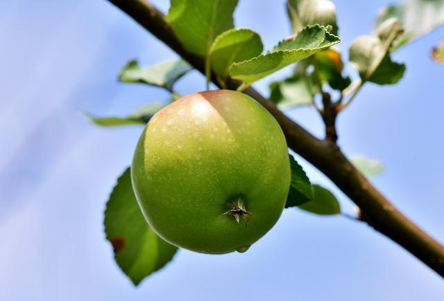 Innesto del melo