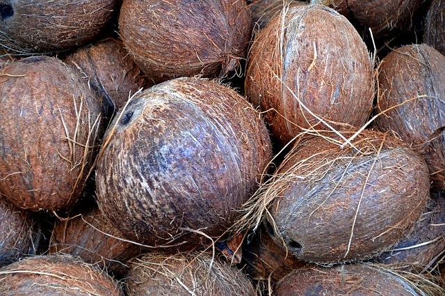 far germogliare un cocco