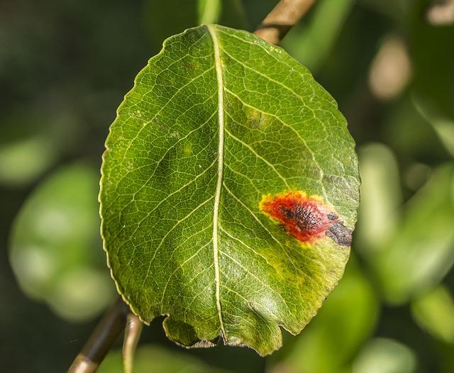 parassiti fungini del pero