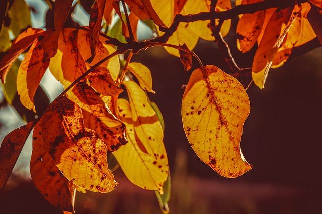 foglie disseccate
