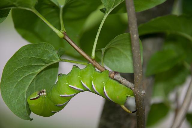 prevenzione dalle larve