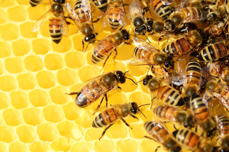 api impollinatori