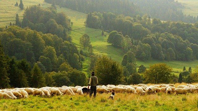 allevamento del bestiame