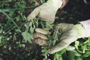 Disoccupazione agricola e malattia