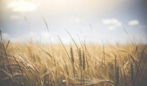 partita IVA agricola costi