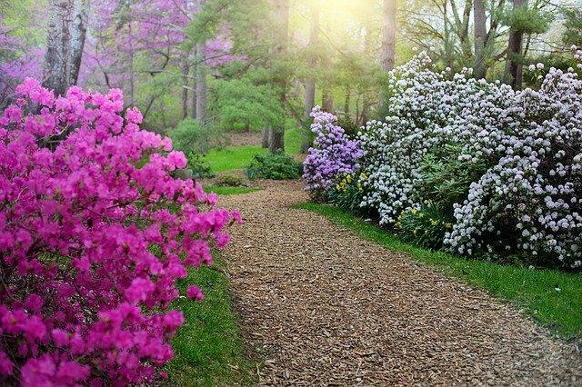 potatura rododendro