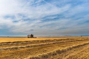requisiti piccolo imprenditore agricolo