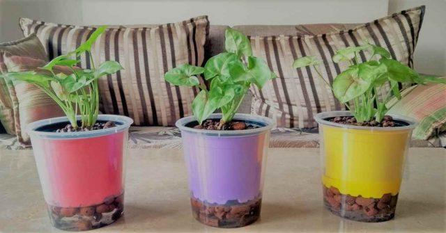 Fertilizzante naturale per piante acquatiche