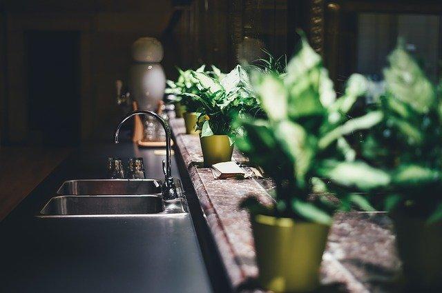Piante che resistono in cucina