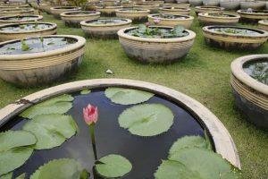 mastelli per piante acquatiche