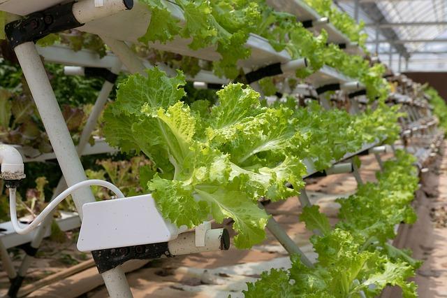 come concimare le piante in idrocoltura