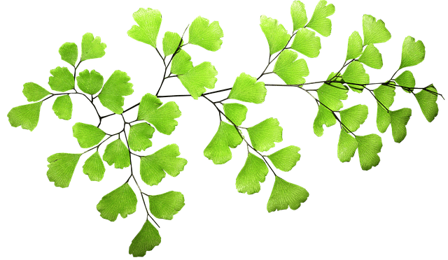 foglie capelvenere