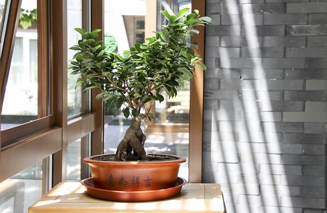 bonsai defogliazione