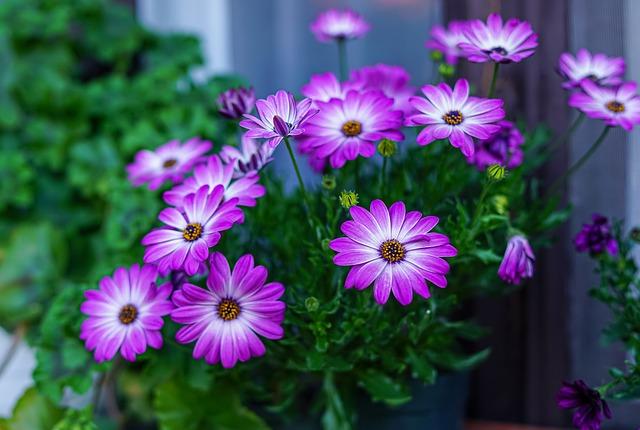 fiori di gerbera