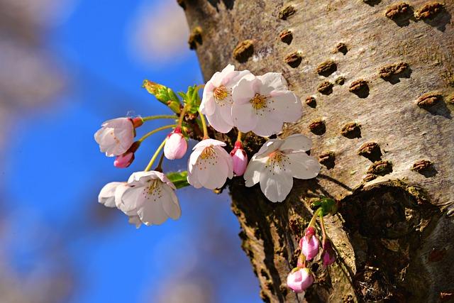albero di melo