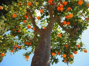 calce idrata per alberi da frutto