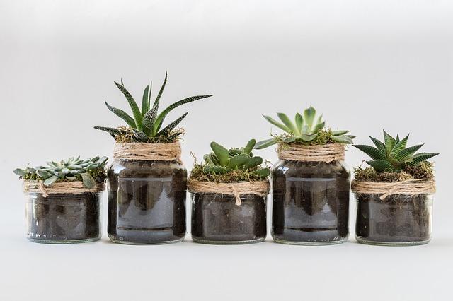 piante grasse febbraio (2)