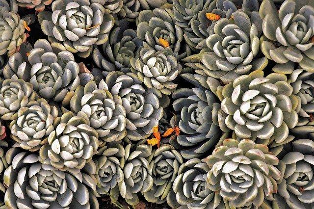 piante grasse marzo (3)