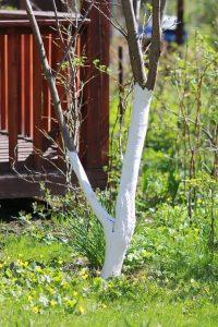 protezione alberi da frutto