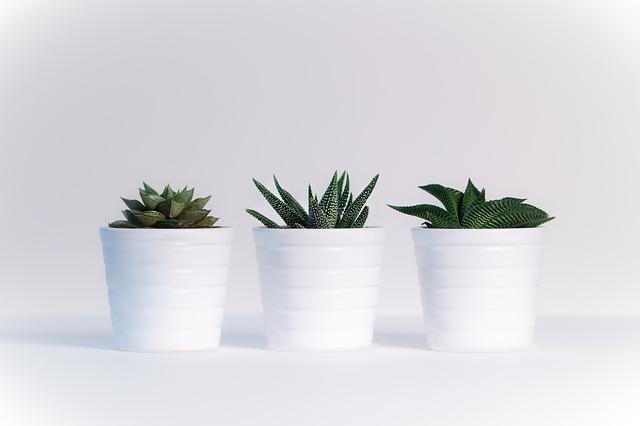 quando rinvasare le piante grasse (3)