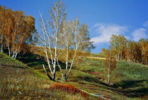 tronchi bianchi