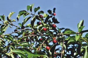 trattamento biologico alberi da frutto