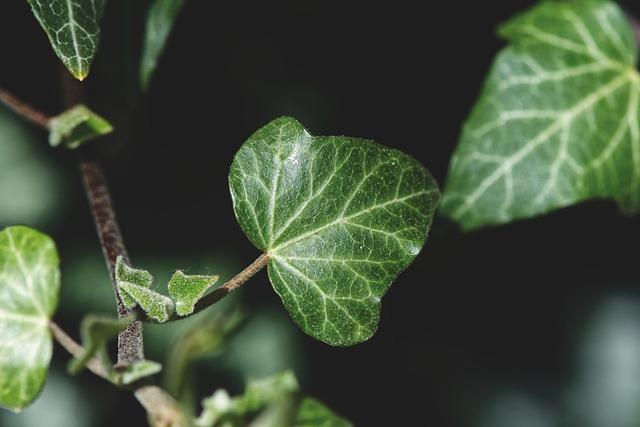 trattamento piante con calce