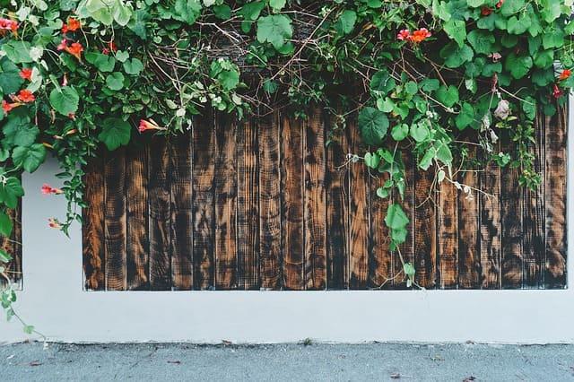 muro con rampicanti
