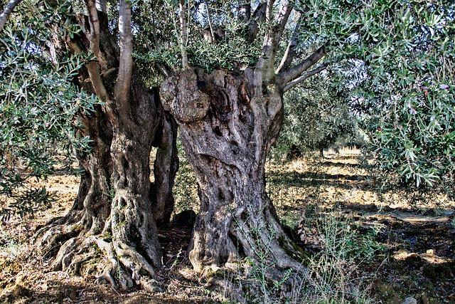 tronco di ulivo con buchi
