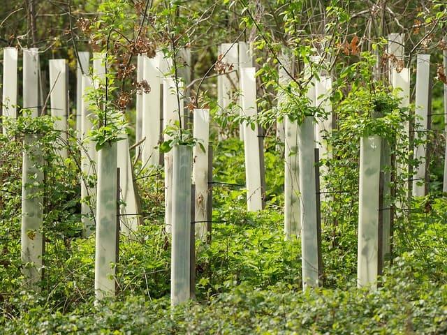 tubi protezione piante