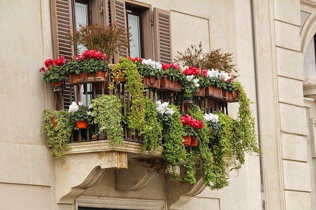 Piante da balcone ventoso