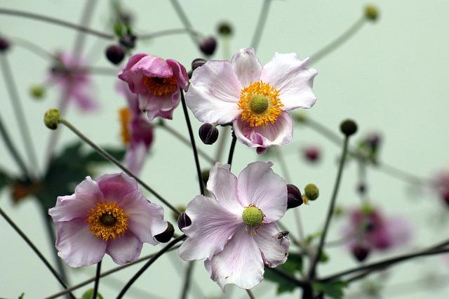 fiori settembre