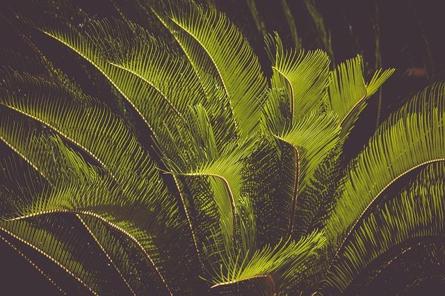 piante esotiche