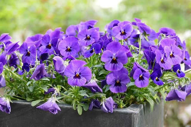 fiori da balcone estivi