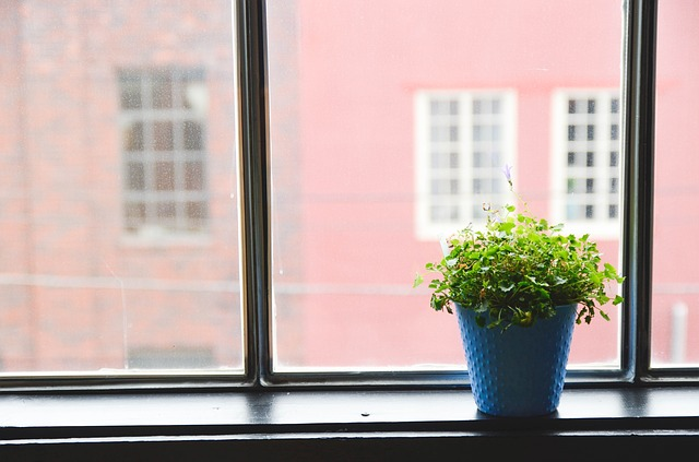 piante da regalare