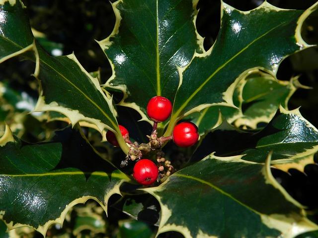 arbusto bacche rosse