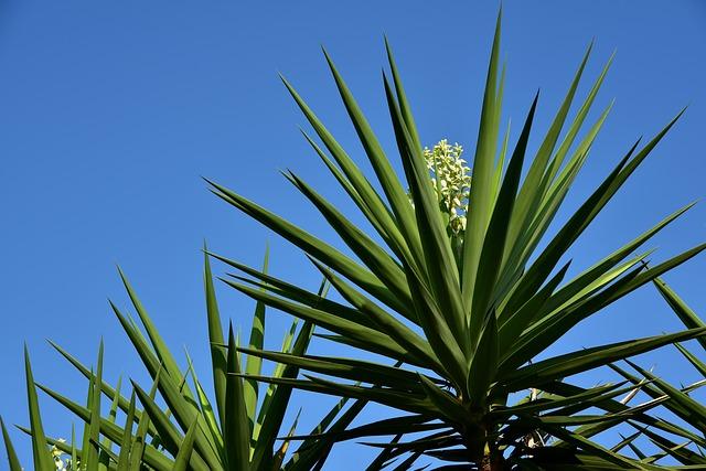 tipi di arbusti