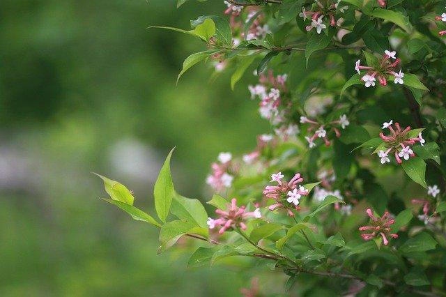 cespugli fioriti