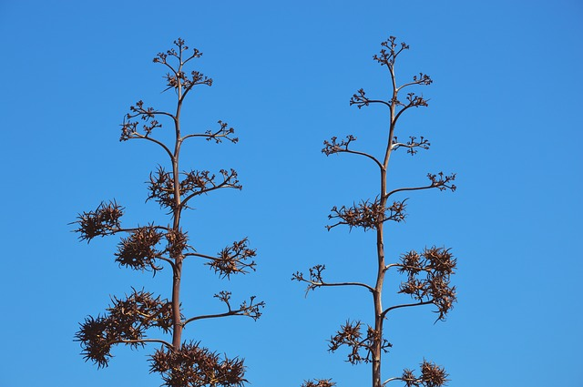 arbusti macchia mediterranea