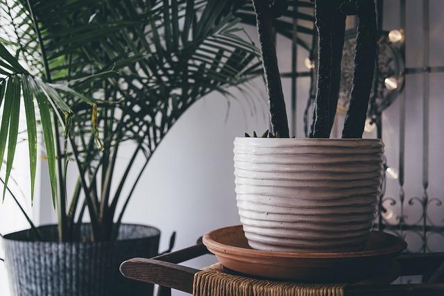 vendita piante online