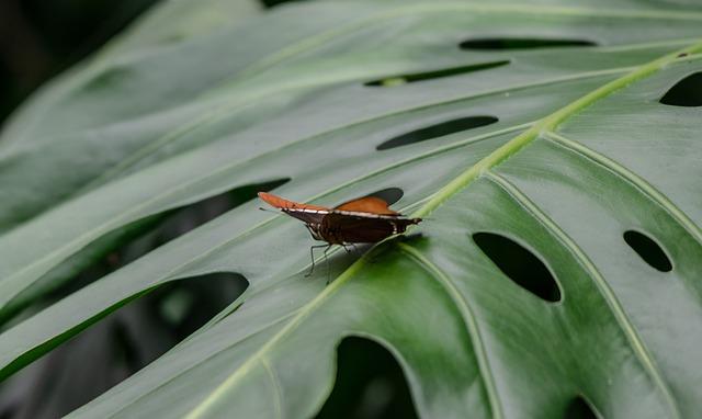 farfalla su foglia di monstera