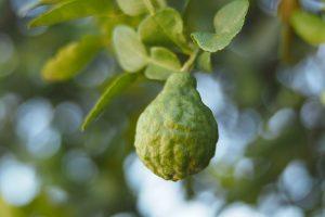 frutto del bergamotto